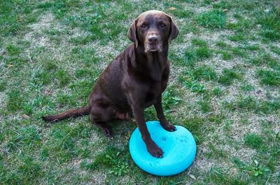 Balancekissen Hund