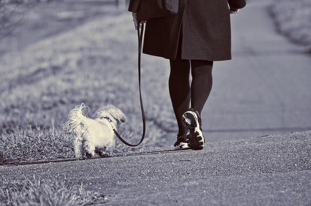 Die richtige Länge der Hundeleine