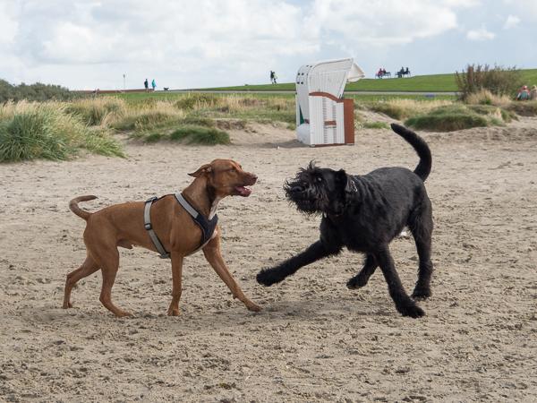 Hund mit Hundegeschirr und Hund mit Halsband