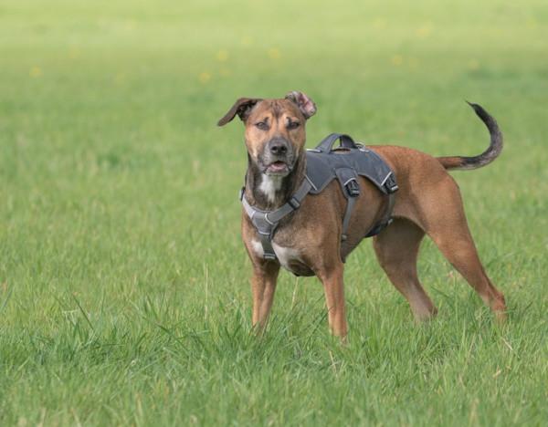 Hundegeschirr oder Halsband