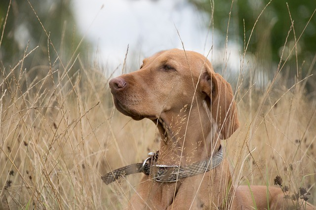 Hundehalsband oder Hundegeschirr