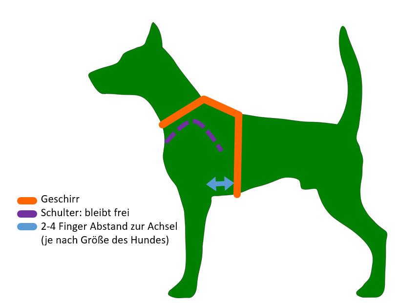 Richtiger Sitz des Hundegeschirrs
