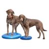 Balancescheibe für Hunde