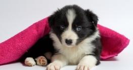 Die Grundausstattung für Hunde