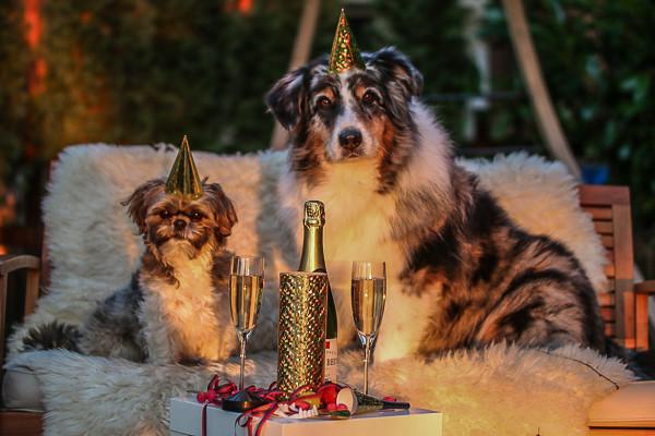 Die Besten Geschenke Fur Hundebesitzer Und Hundeliebhaber