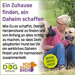 Kurs: Hund anschaffen