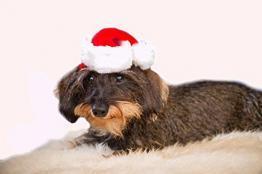 5 Stück Servietten WESTIE weiß Hündchen Weihnachten  Hunde Tiere Sweet Christmas
