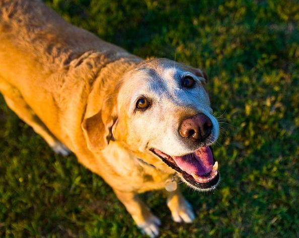 Hundejahre in Menschenjahre umrechnen