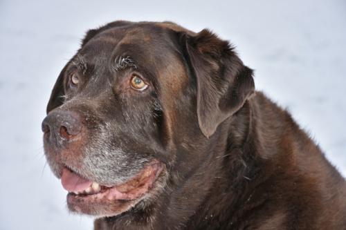 Hund wird alt