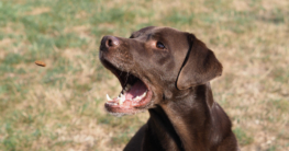 Hundegebiss - Gebiss Hund