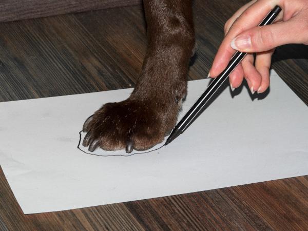 Schuhe für Hunde - Größe ermitteln