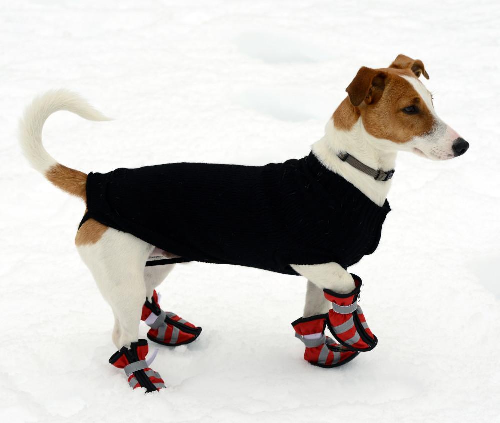 Schuhe für Hunde