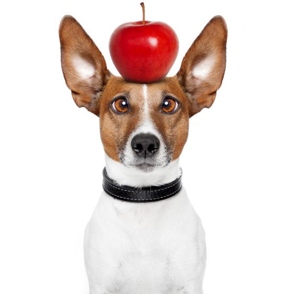Hund mit Apfel