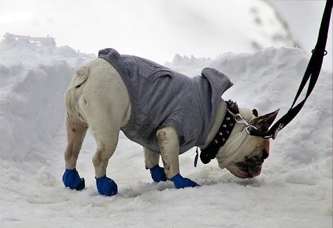Hund mit Schuhen - Pfotenschutz im Winter
