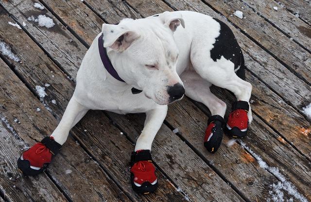 Schuhe für Hunde Vorteile Nachteile