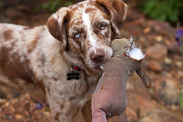 Ungeeignetes Kauspielzeug für Hunde