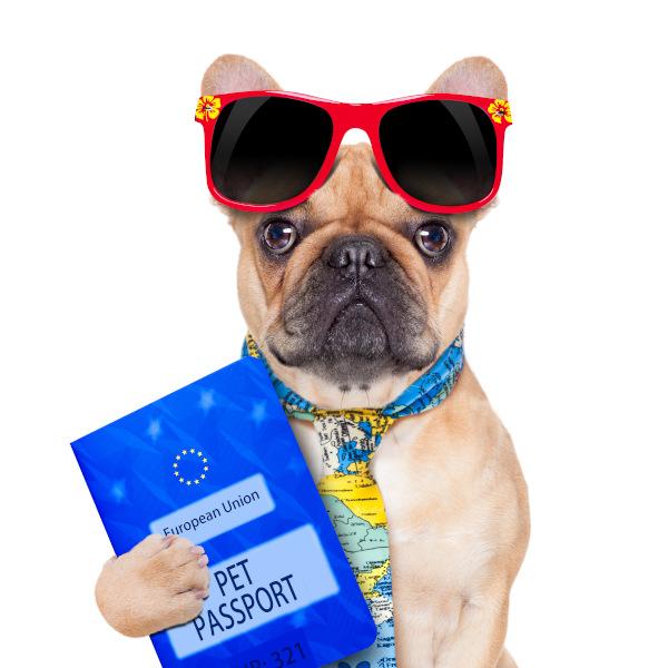 Einreisebestimmungen beim Hundeurlaub