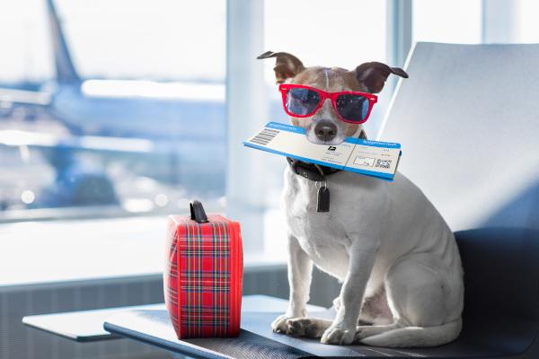 Flugreise mit Hund