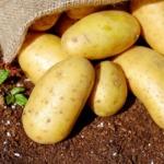 Hund Kartoffeln