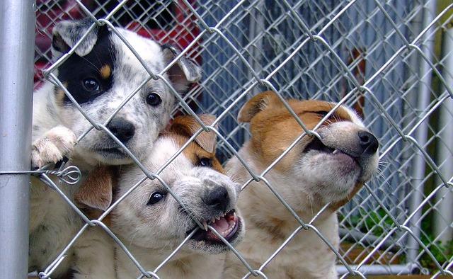 Hund adoptieren aus Tierheim