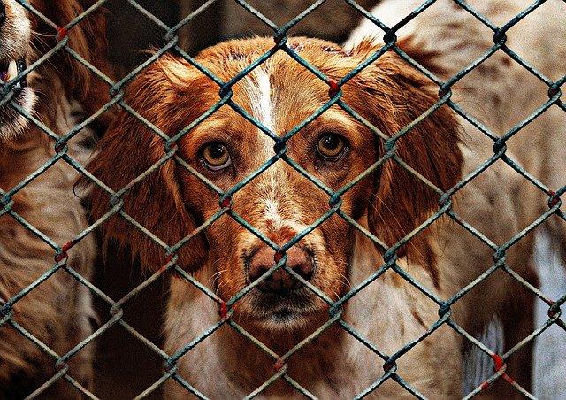 Hunde adoptieren aus dem Tierschutz