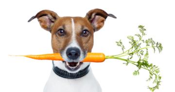 Karotten Hund - Dürfen Hunde Karotten essen