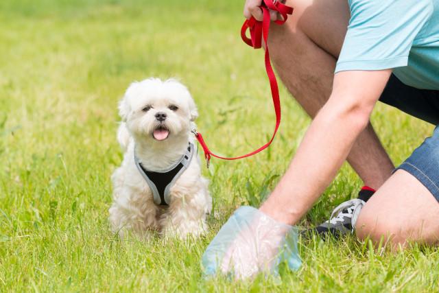 Kotprobe sammeln - Hund Wurmkur
