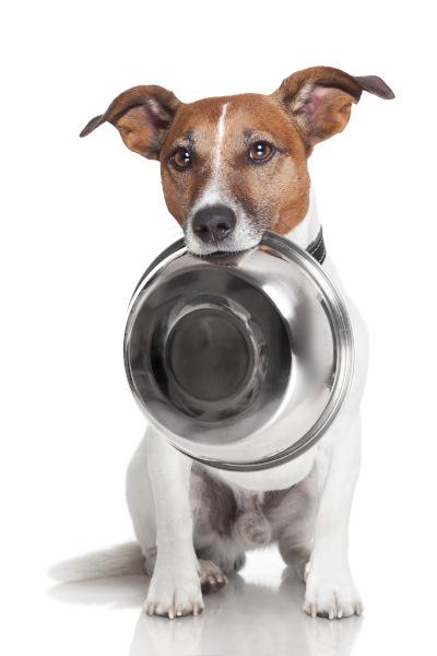 Paprika für Hunde