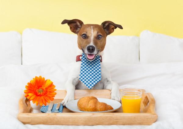 Unterkünfte beim Reisen mit Hund
