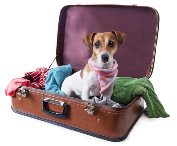 Urlaub mit Hund - Packliste