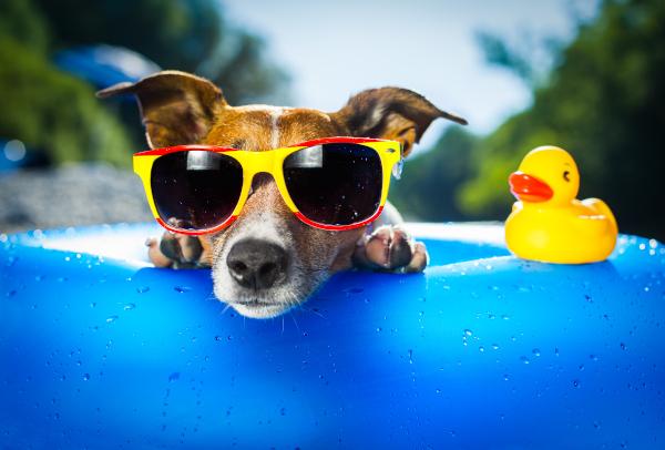 Urlaub mit Hund - Was Du beim Hundeurlaub beachten solltest