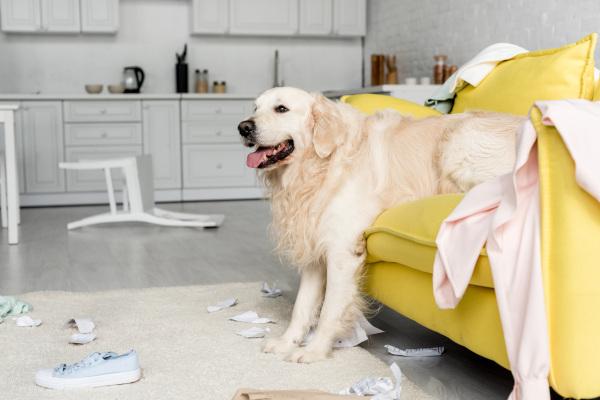 Haftpflichtversicherung für Hunde