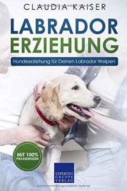 Labrador Erziehung: Hundeerziehung für Labrador Welpen