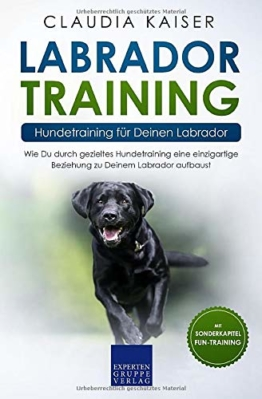 Labrador Training – Hundetraining für Deinen Labrador