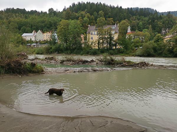 Lech Füssen Hund Urlaub