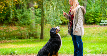 Online Hundeschule - Hundetraining online