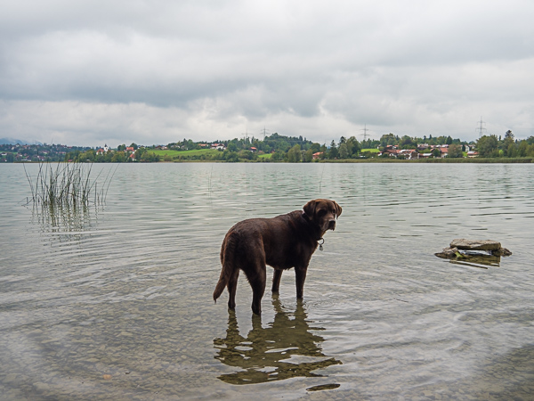 Weissensee mit Hund