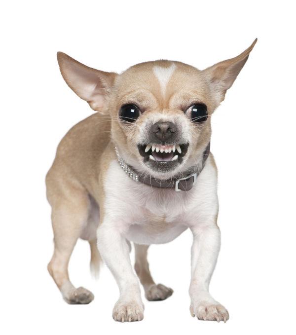 Fehlende Hundeerziehung und Sozialisierung