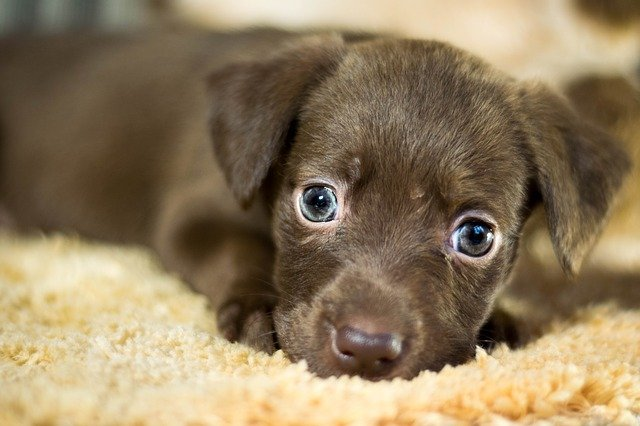 Hundeerziehung Welpen