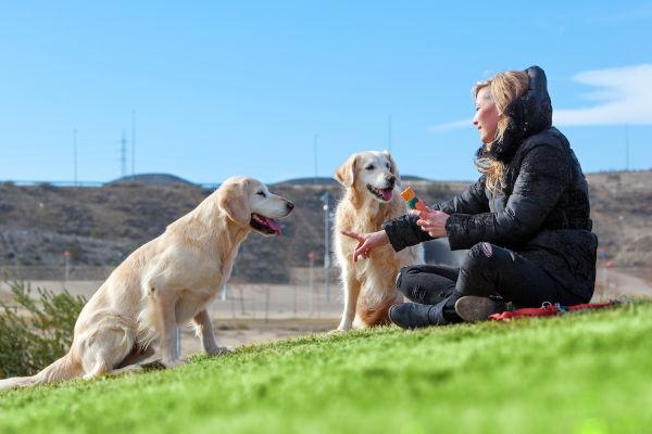 Hundeerziehung beginnt im Welpenalter