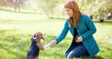 Hundeerziehung ohne Leckerlies