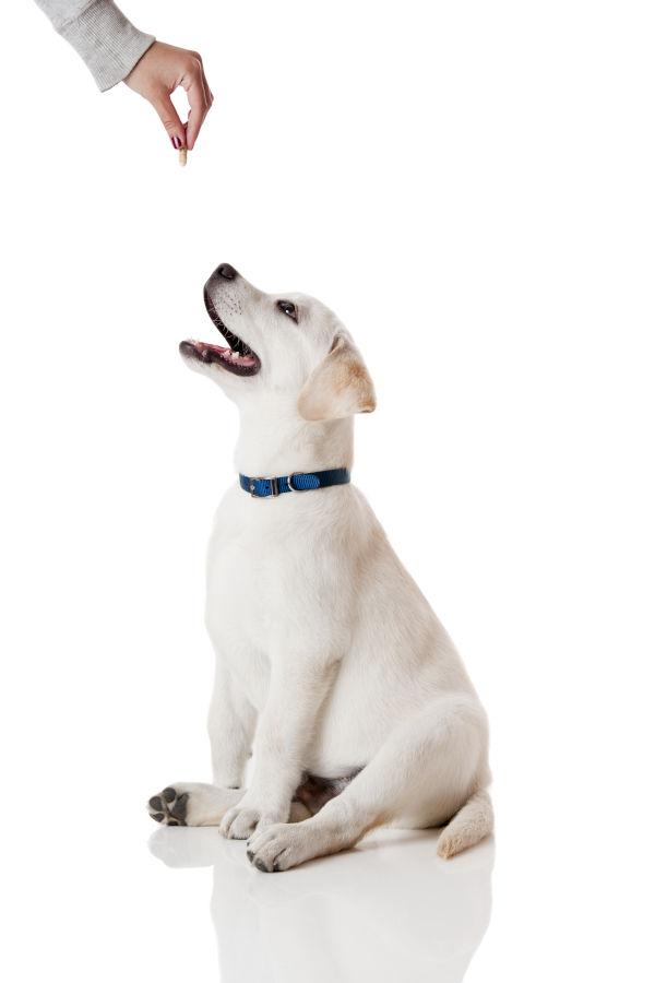 Hundetraining mit Leckerlies