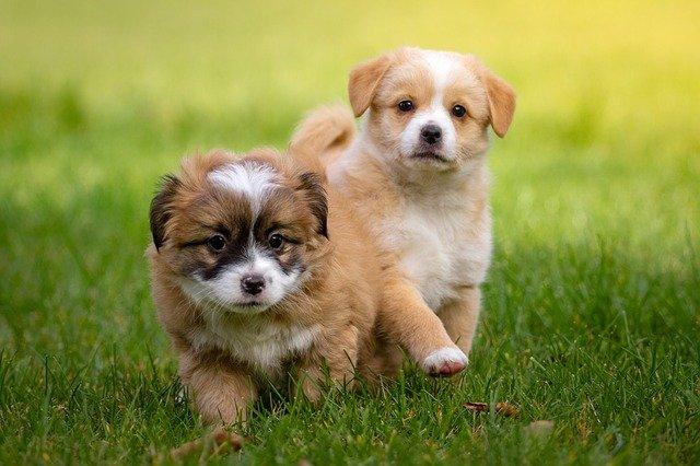Hundewelpen erziehen