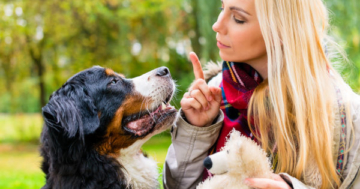 Konsequenz ist wichtig in der Hundeerziehung