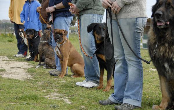Kosten Hundeschule