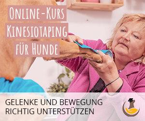 Online Kurs Kinesiotaping für Hunde von Tierärztin Dr. Sabine Mai
