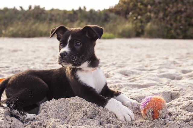 Welpenspiele für Hundewelpen