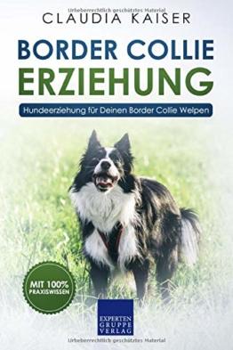Border Collie Erziehung: Hundeerziehung für Deinen Border Collie Welpen