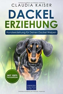 Dackel Erziehung: Hundeerziehung für Deinen Dackelwelpen