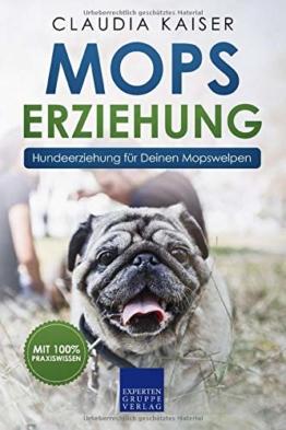 Mops Erziehung: Hundeerziehung für Deinen Mopswelpen